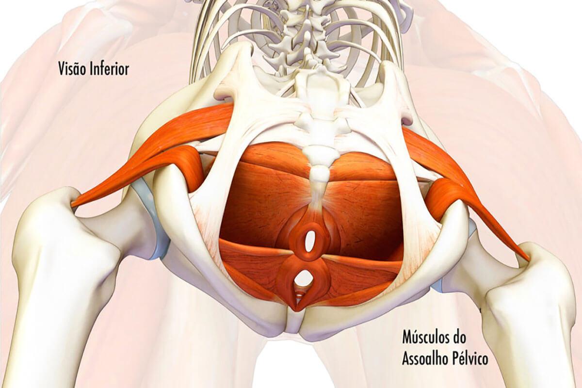 Músculo do Assoalho Pélvico